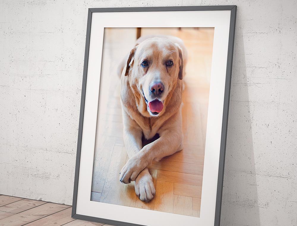 biss25 premium hundefutter  - hund04b - Futter-Abonnement