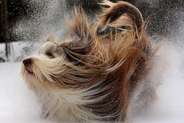 hund winter - schnee - Kalte Schnauze