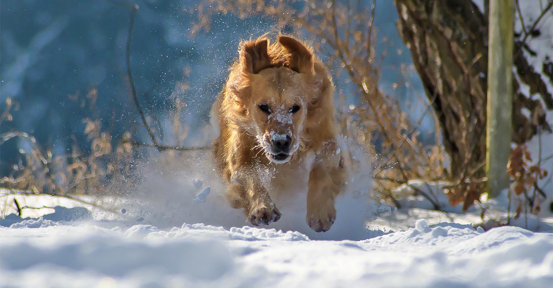 hund winter - schnee2 - Kalte Schnauze