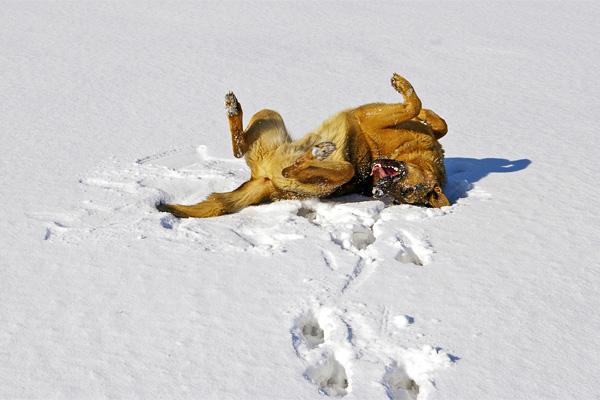 hund winter - sonne - Kalte Schnauze