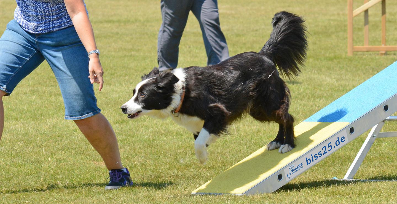 - hundetraining01 - Hundeerziehung und Hundetraining