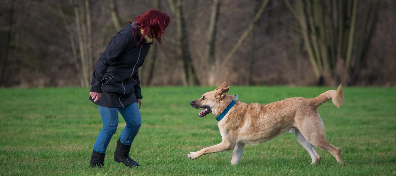 - hundeerziehung03 - Hundeerziehung und Hundetraining
