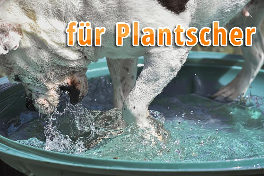 schwitzen hunde - hund pool11 - Schwitzen Hunde? Tipps für heiße Tage