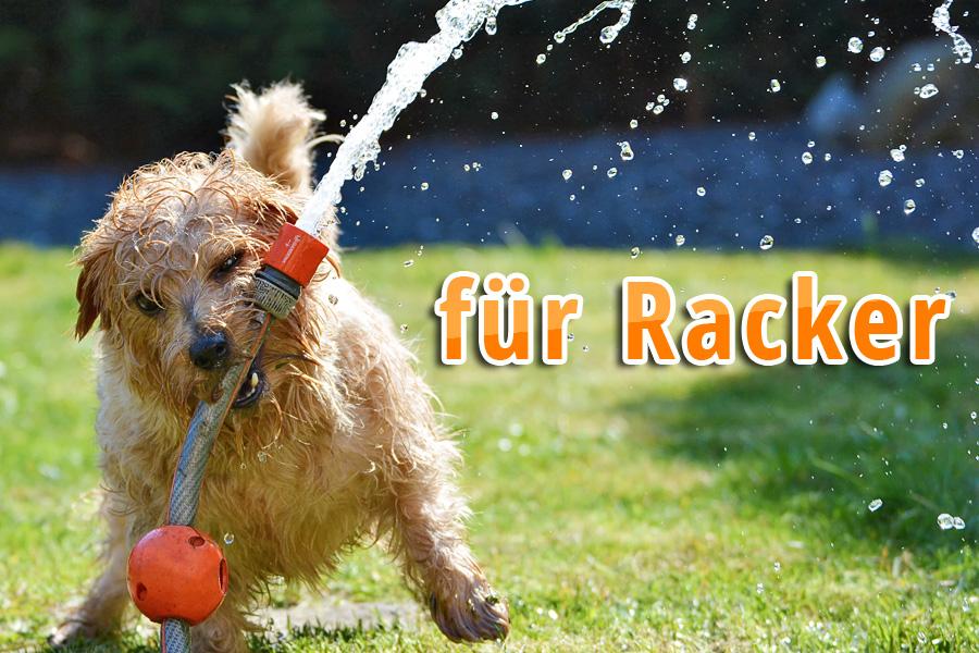 schwitzen hunde - hund wasser abkuehlen11 - Schwitzen Hunde? Tipps für heiße Tage