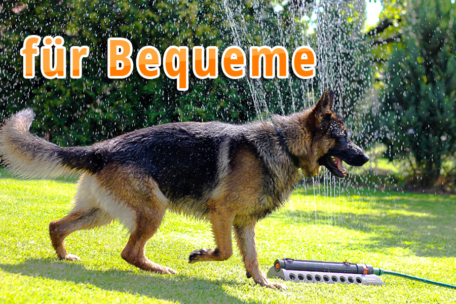schwitzen hunde - hund wasser abkuehlen12 - Schwitzen Hunde? Tipps für heiße Tage