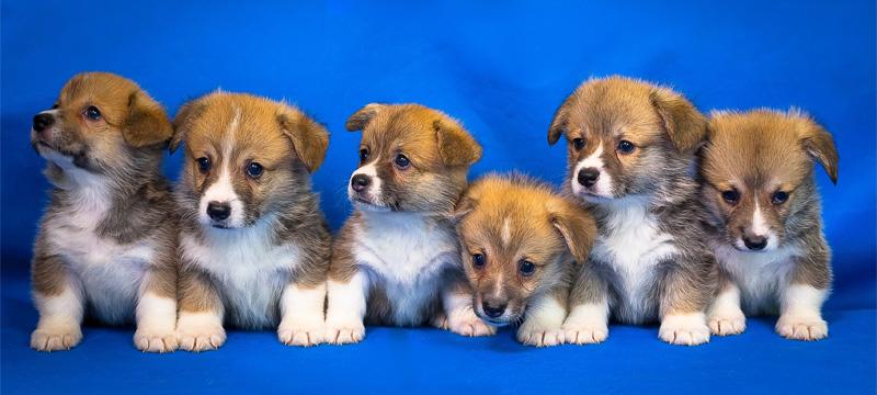 - welpen01 - Hundewelpen verantwortungsvoll kaufen