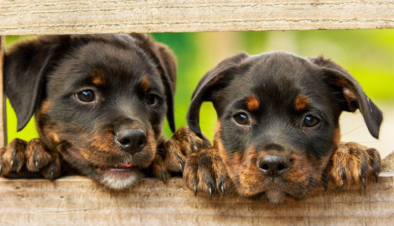 - welpen02 - Hundewelpen verantwortungsvoll kaufen