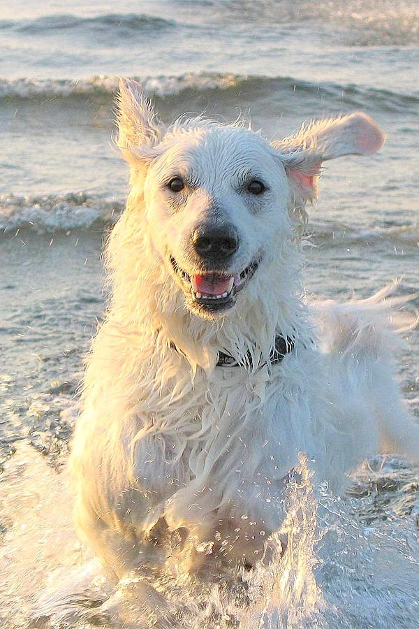 [object object] - hund wasser spass2 - Schwimmen mit Hund